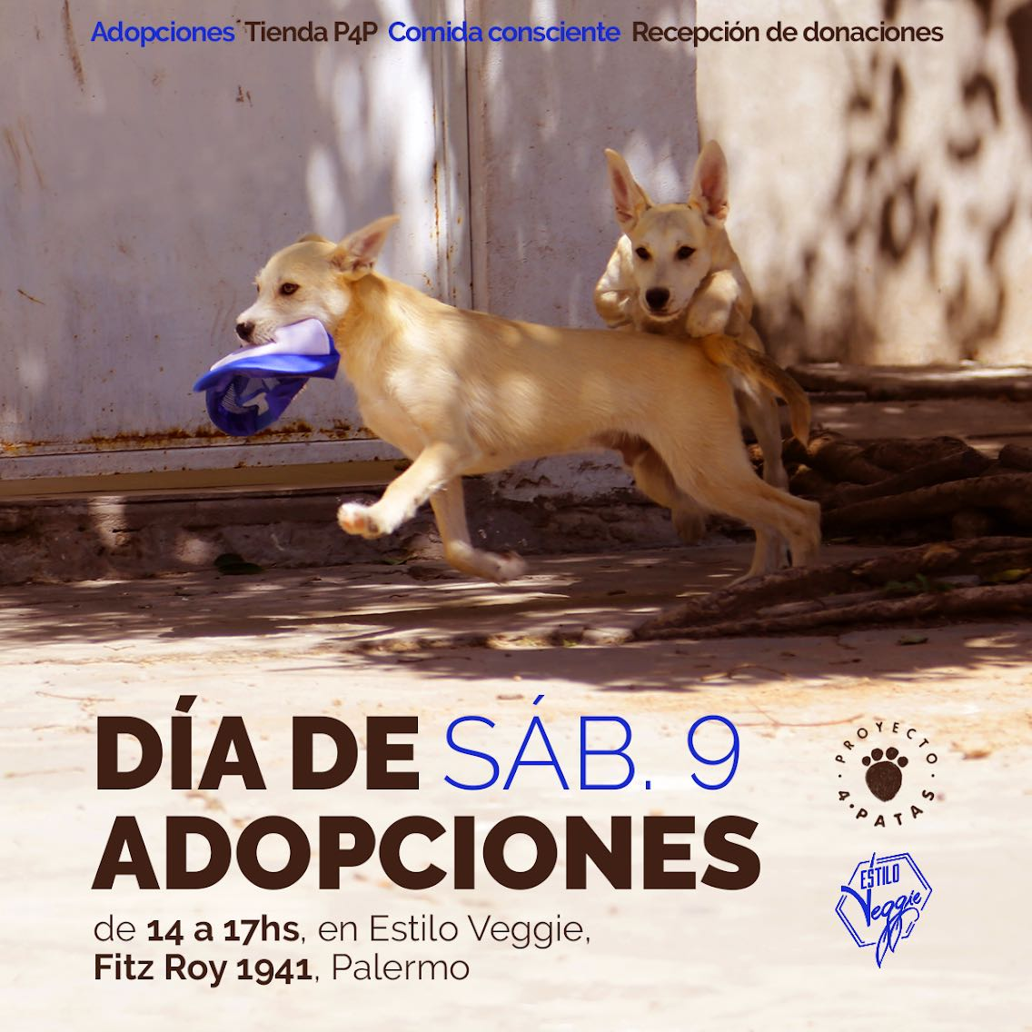 Adopciones Junio