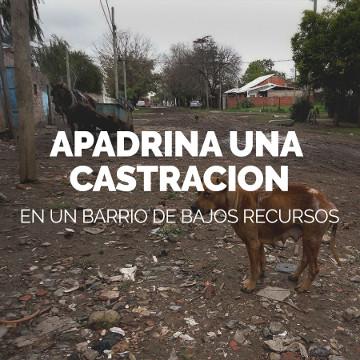 apadrina castracion